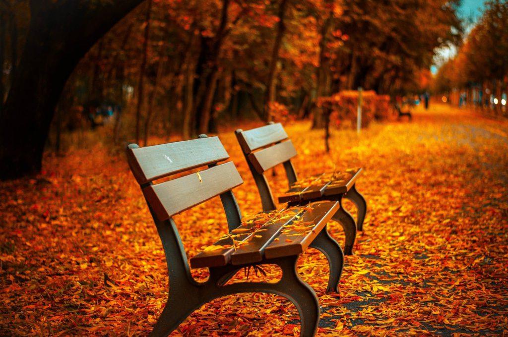 紅葉がとても綺麗な道にあるベンチの画像